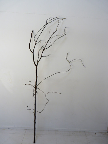 tree P1140814